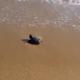 Il primo giorno della tartaruga